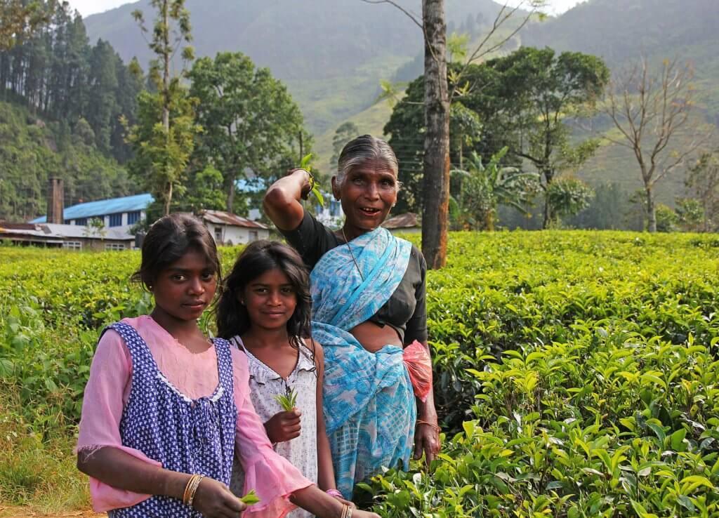 kinderarbeid, kinderen op de theeplantages